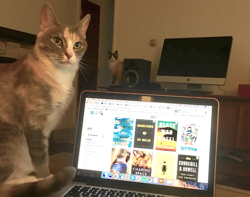 Liberty's cats posing with a laptop open to the New Release Index